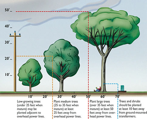 Tree_planting_illustration_with_appropriate_distances